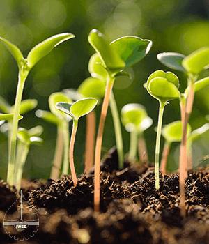 گزارش کار جوانه زنی بذر - آزمایشگاه باغبانی عمومی