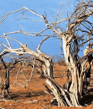 گرمایش جهانی و تغییر اقلیم عامل جنگ های منطقه ای